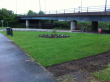Turf down - shrubs and bulbs now planted